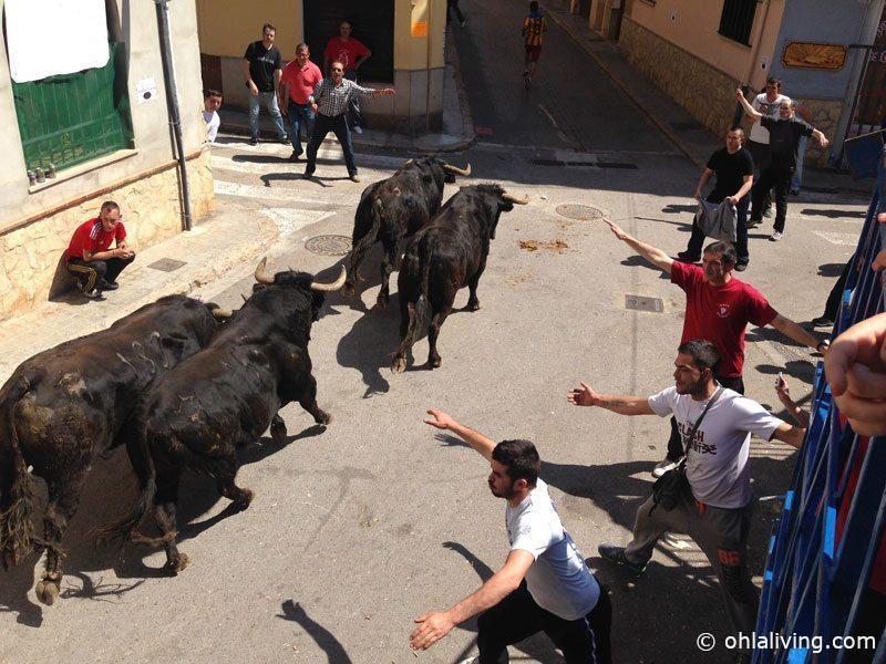 Bull run Pedralba