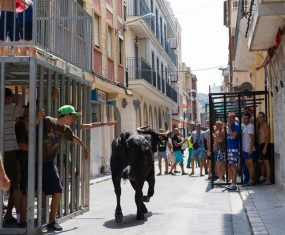 Bull run in the streets