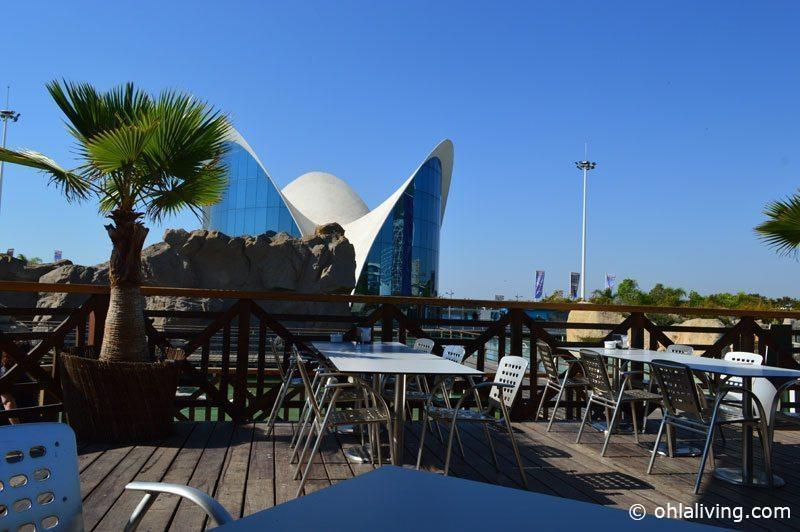 In to the blue: A day at the Oceanographic Valencia