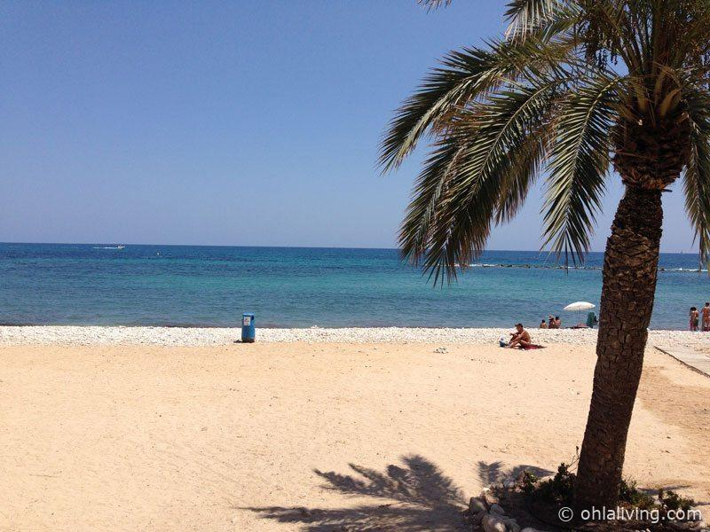 altea-beach-palm