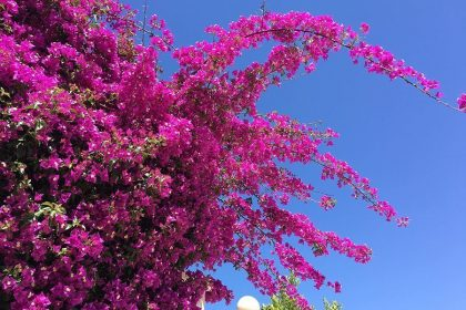 5 Sure Signs of Spring in Valencia
