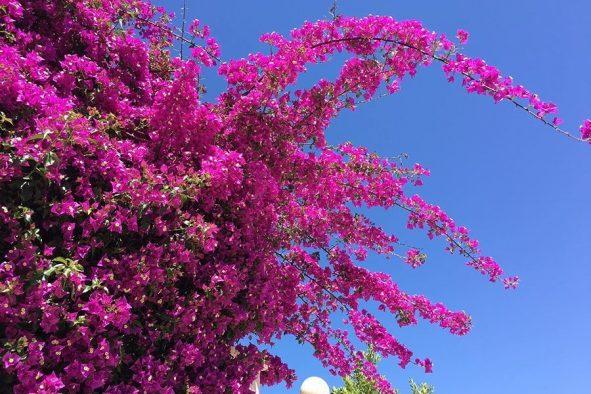 Spring in Valencia Spain