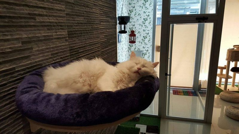 Cat Cafe Valencia