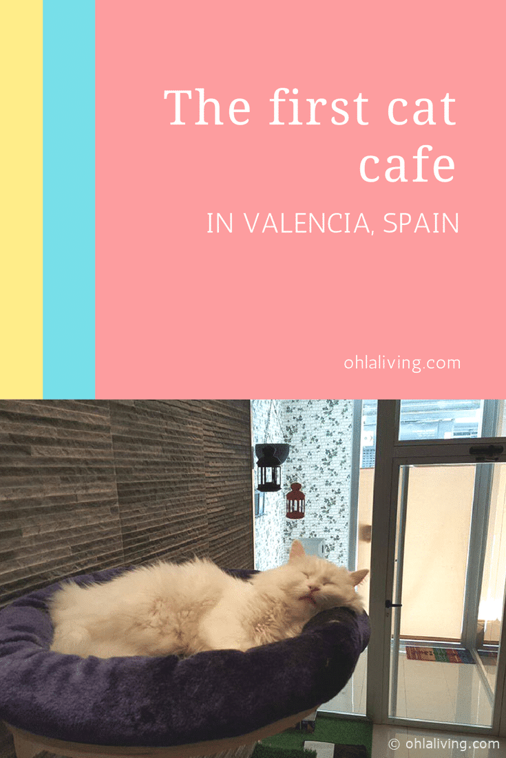 The first cat cafe in Valencia, Spain