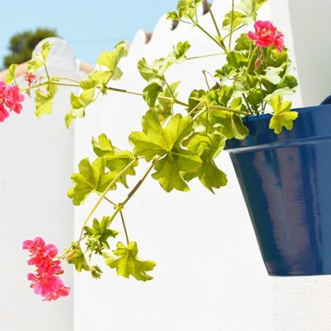 Spanish Inspired Plant Pots