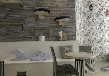 El Passatge Dels Gats A Cat Café In Valencia