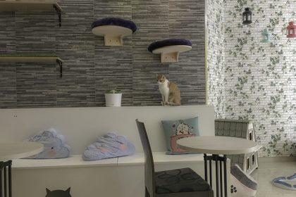 Review: El Passatge Dels Gats A Cat Café In Valencia