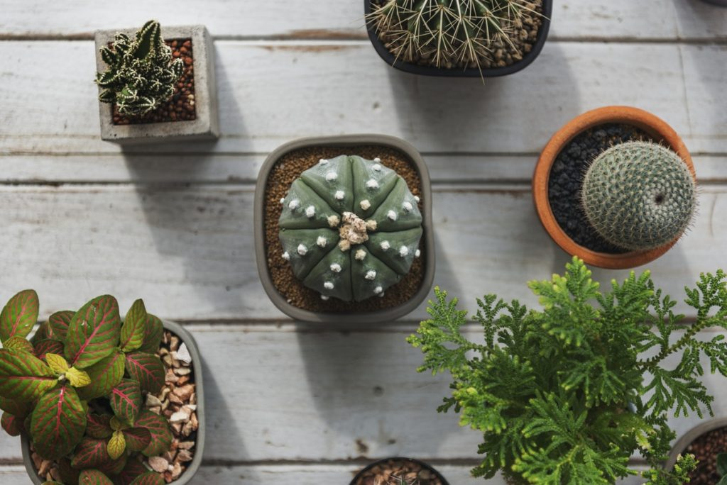20 Online Plant Shops In Spain
