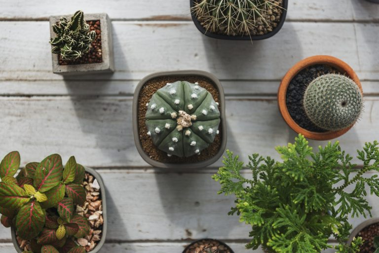 20 Online Plant Shops In Spain