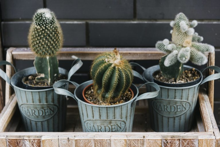 Online Shops Where To Buy Cactus And Succulents