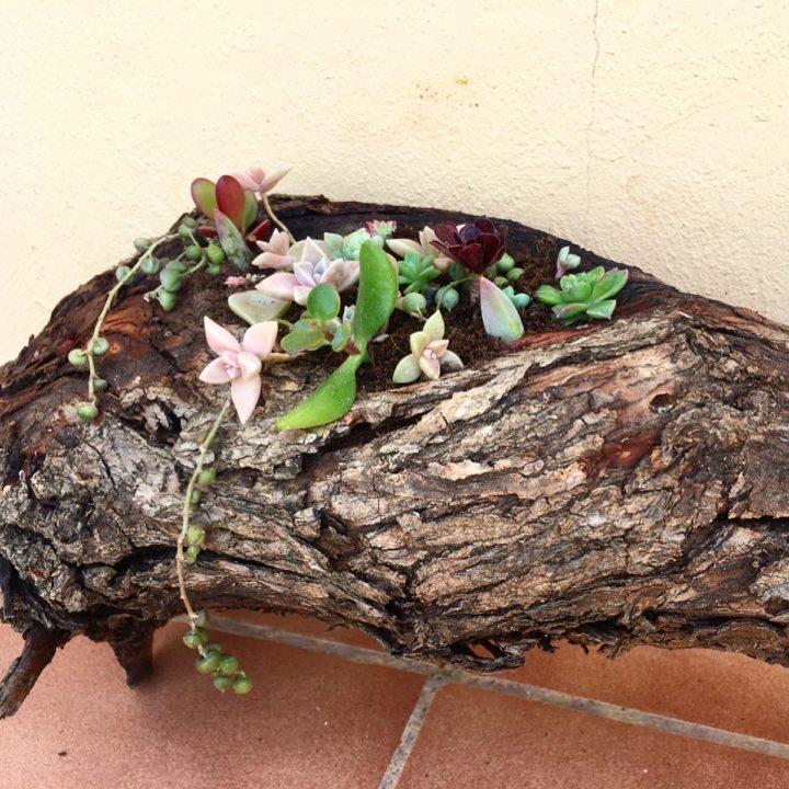 DIY Wooden Log Succulent Planter